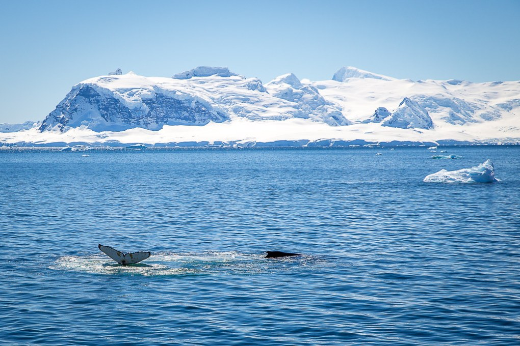 IMG_8772_Antarctica