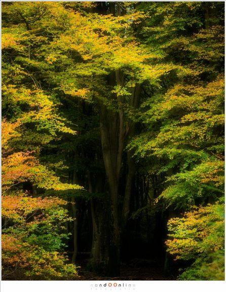 Een doorgang in het door zonlicht overgoten balderendek naar de dansende bomen in het Speulderbos, verborgen in de duisternis van het bos (ISO400, f/4,5, 1/250, -2,3EV, 105mm brandpunt)