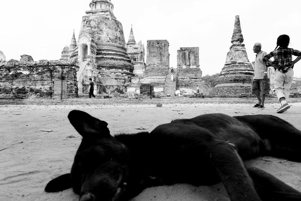Thaïlande - Ayutthaya - 079 - Wat Phra Si Sanphet