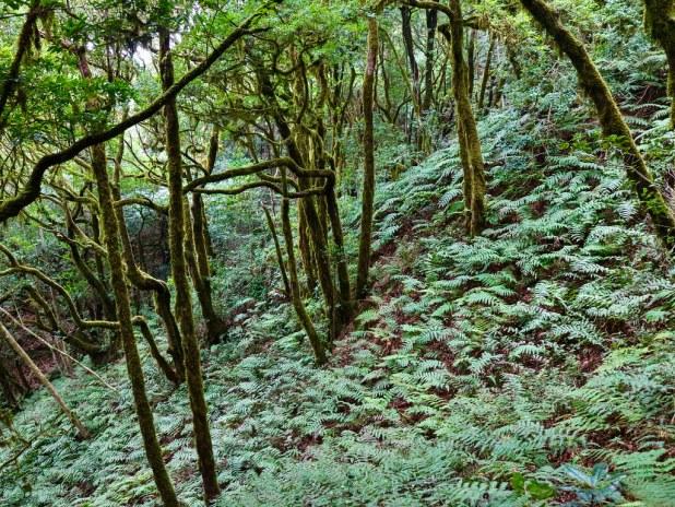 Pateo de El Bosque Encantado