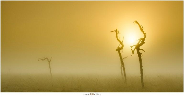 Eenzaam in de mist, maar waar zijn de andere skeletten van de ruwe dennen? (70mm; ISO100; f/11; t=1/100sec; Lee soft GND0,6)