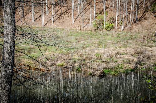 Todd Creek Falls-036