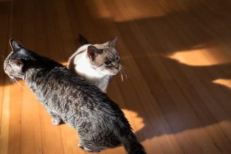 Feline Friday: So long, 2016!
