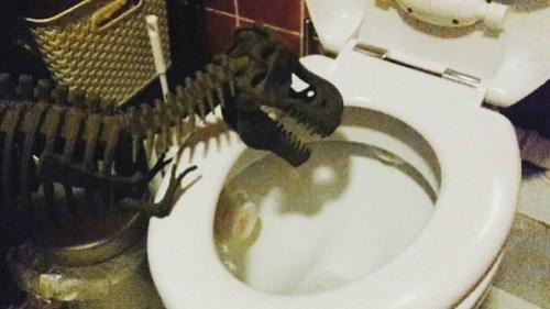Rex musste noch lernen, nicht aus der Toilette zu trinken.