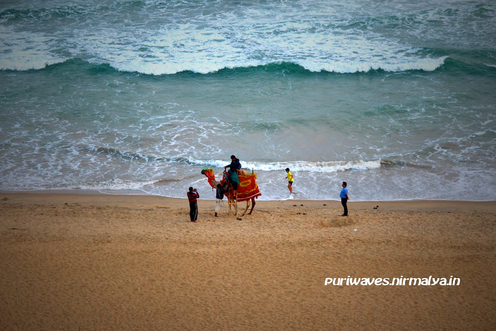 Camel Ride Fun - Golden Puri Beach