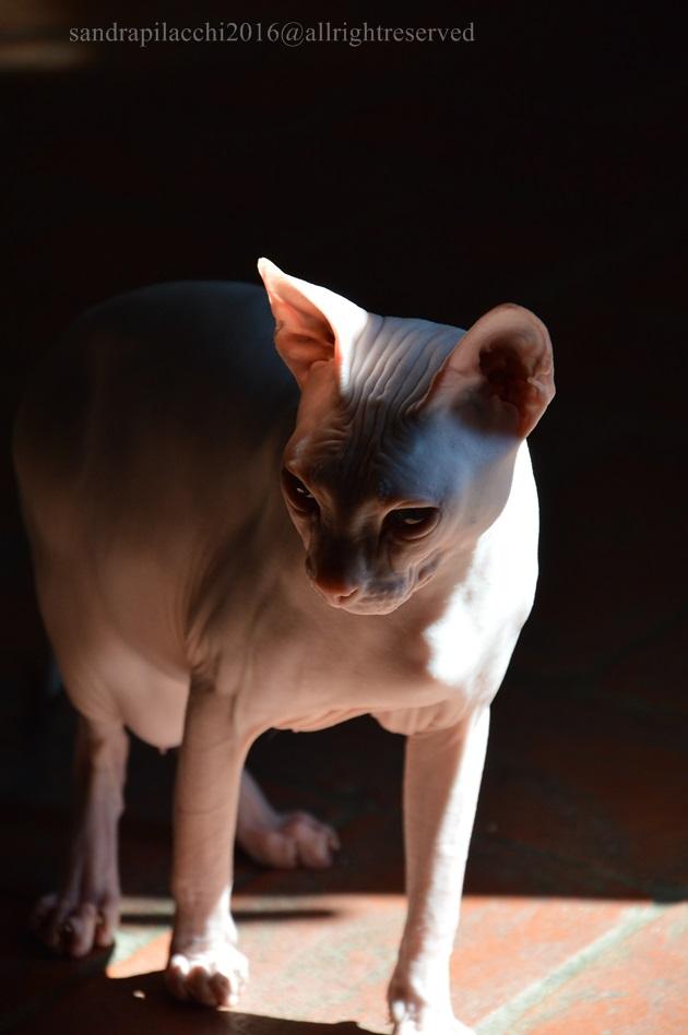 il gatto nudo DSC_0473