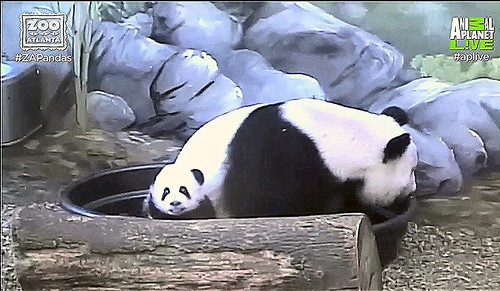 "Ya Lun: ""Mama brought me out to say Hewwo!"" Capture 10:31 AM EST"