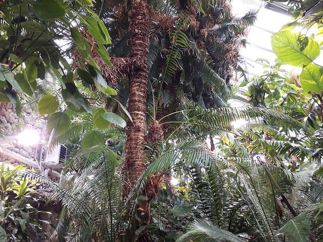 Botaniska tradgarden Lund (4)
