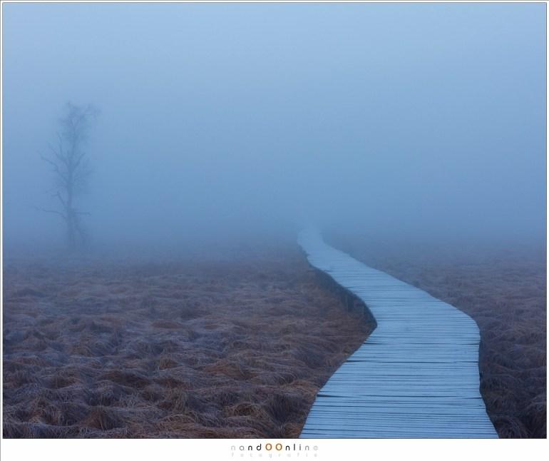 Het wandelpad, makkelijk te volgen naar een onbekende, onzichtbare plek. (90mm; ISO100; f/8; t=0,4sec)