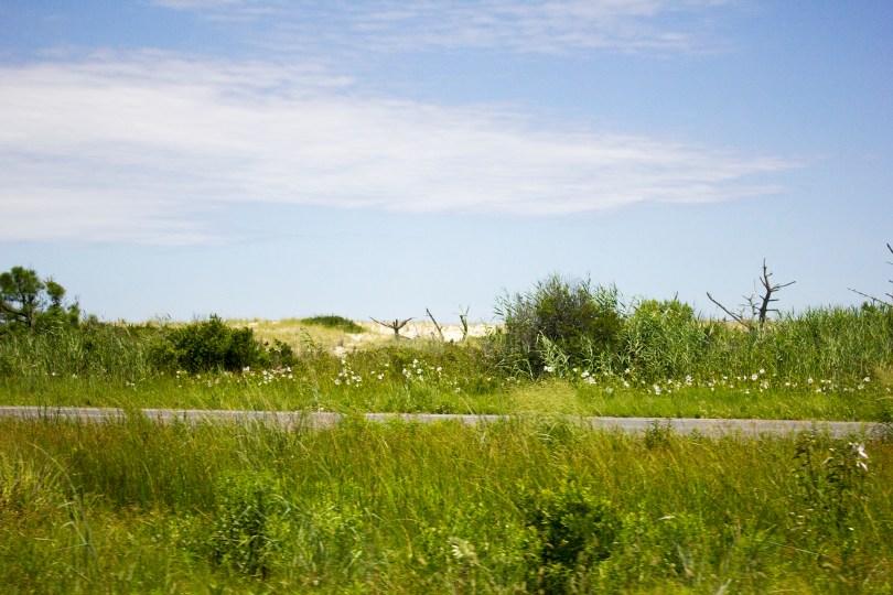 historic-delaware-beach-road