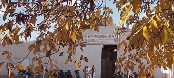 Planta procesadora de Nuez en Londres, Catamarca.