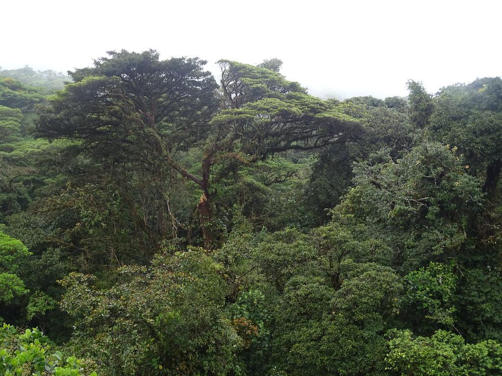 Selvatura Park bosques Monteverde Costa Rica 06