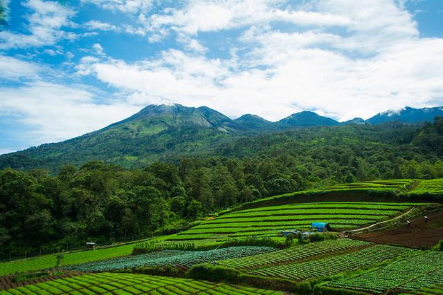 watu-ondo-pemandangan-sepanjang-perjalanan
