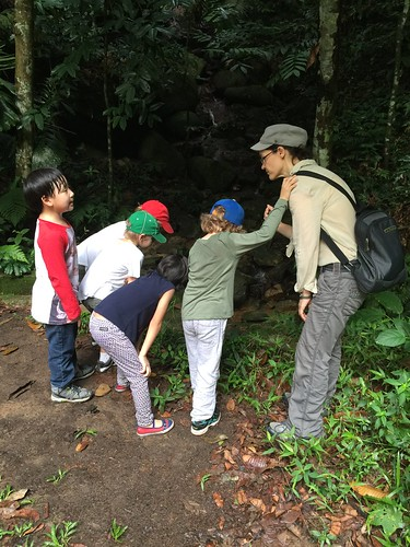 Jungle School