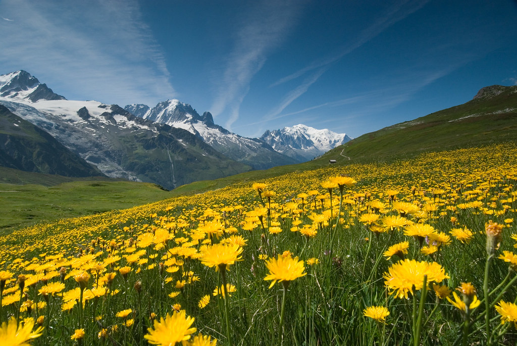 Meadow of Yellow Flowers and Mountains   Took this photo for      Flickr     Meadow of Yellow Flowers and Mountains   by OneEighteen