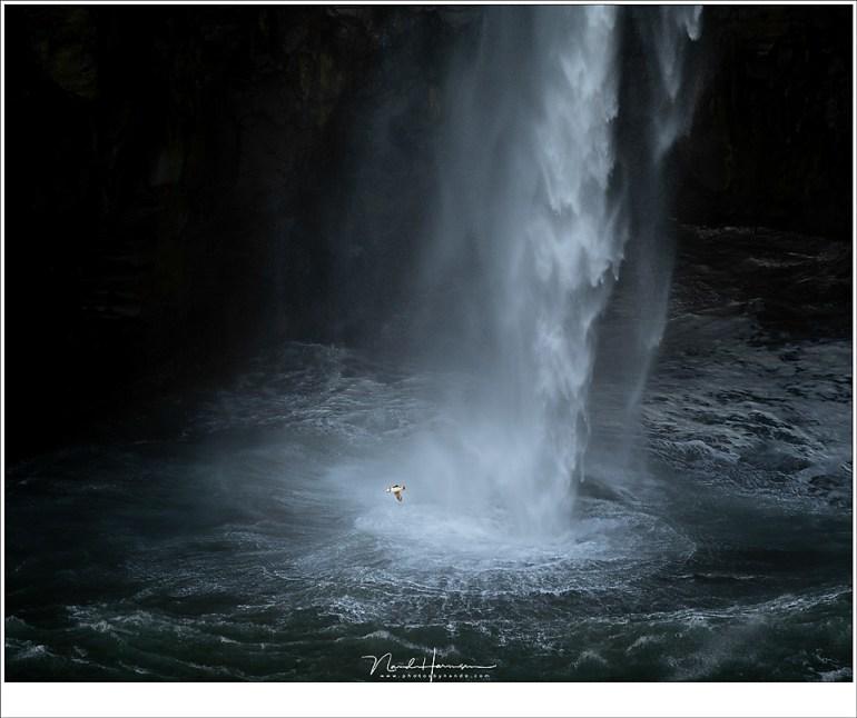 Rondjes om de waterval heen, van rots naar rots scherend over het water. Ze zijn klein, ze zijn snel, en ze zijn grappig om te zien. Geen wonder dat ze populair zijn. (200mm | ISO100 | f/2,8 | 1/250)