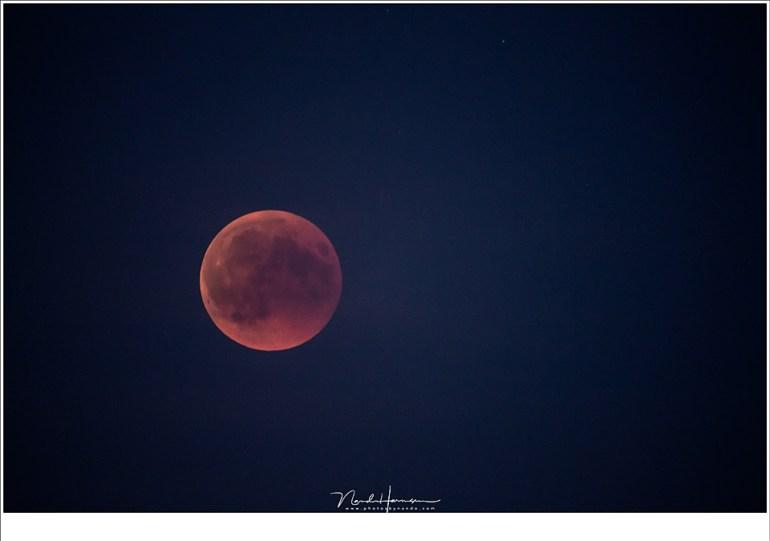 Het het verdwijnen van de schemerkleuren en het vallen van de nacht werd de bloedmaan indrukwekkender, hoewel er toch wat bewolking aanwezig was (800mm | ISO3200 | f/5,6 | 0,6sec)