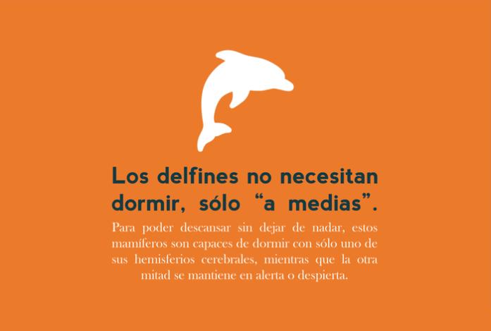 diciembre: los delfines no necesitan dormir, sólo 'a medias'