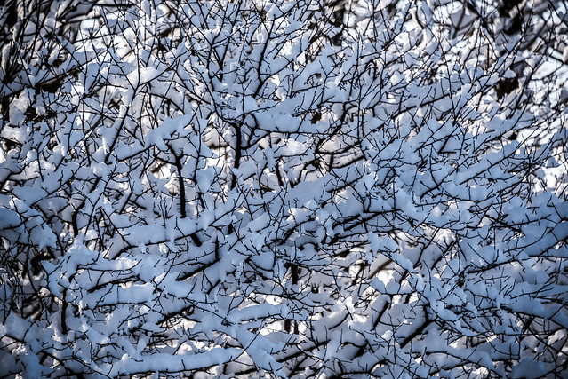 More snow-covered branches.