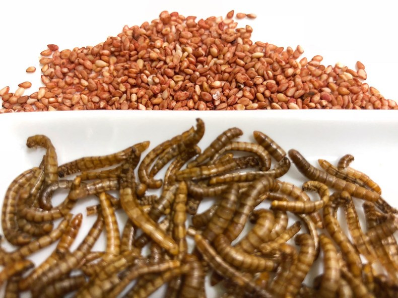 Gusanos, insectos. Chef Koketo