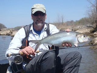 Photo of man holding American shad
