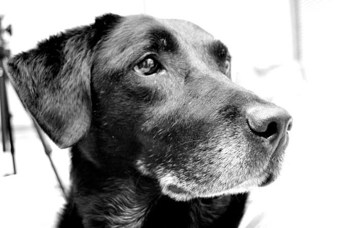 Resultado de imagen de old dog