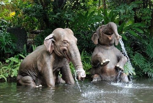 Jungle Cruise - Magic Kingdom - Walt Disney World