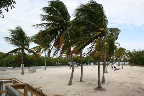 Windy day palm trees | windy day palms.... just minutes ...
