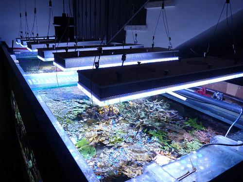 Orphek-aquarium-led-light-daylight
