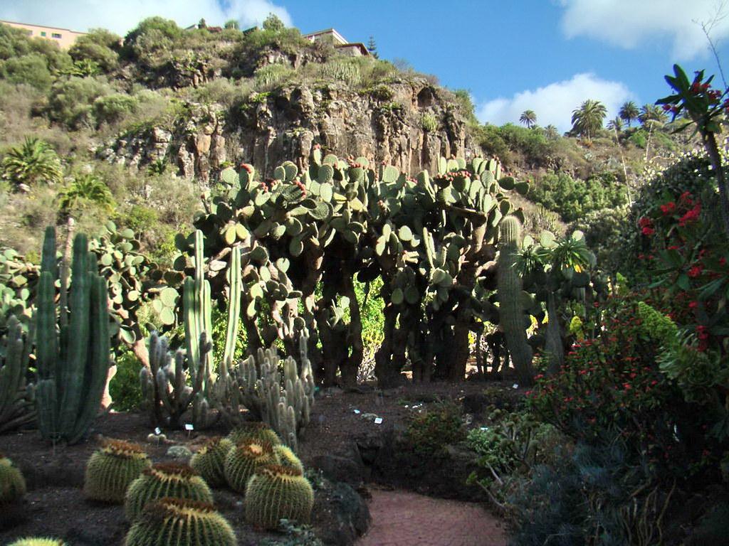 Cactus Opuntia y Cactus erizo Jardin Canario Las Palmas de Gran Canaria 16