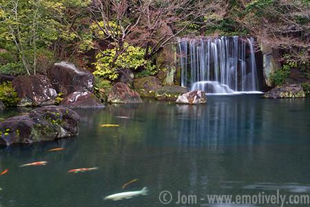 Giant Koi Pond Nishi Oyashiki Ato Garden Chareonsri