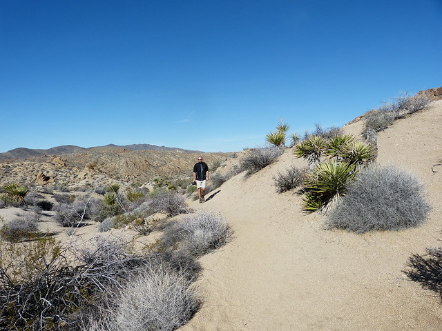 Roadtrip from L.A. to Las Vegas: Hiking in Joshua Tree National Park - Lost Palm Oasis