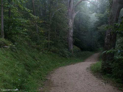 Pathway Through A Dark Forest Light Beckons The Traveler
