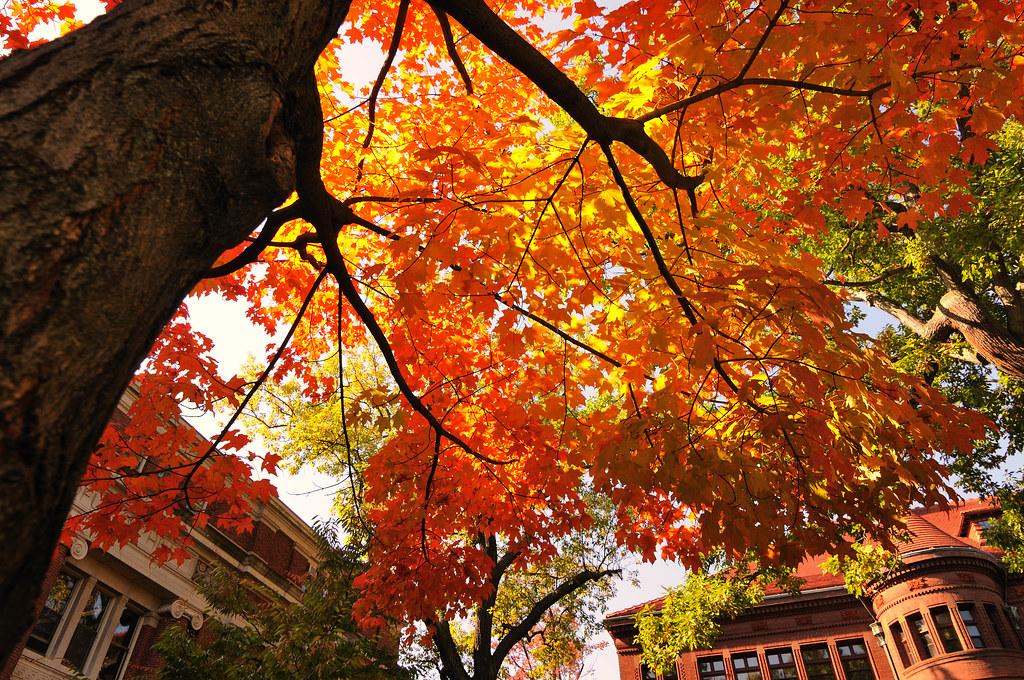 Fall Foliage Harvard Yard Nietnagel Flickr