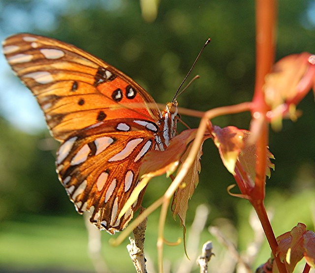 Mother Nature Camouflaging An Orange Butterfly Explore