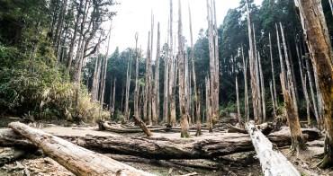鹿谷旅遊︱冬之忘憂森林.枯水期的山林樹群之美