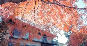 京都自由行丨賞楓無料名所、鷺森神社.透著光的楓情
