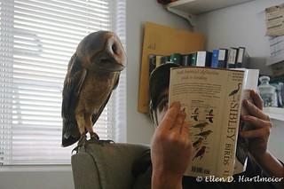 buho lector