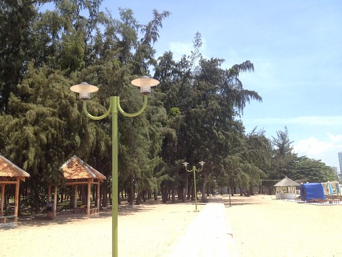 casuarina trees before beach in nha trang