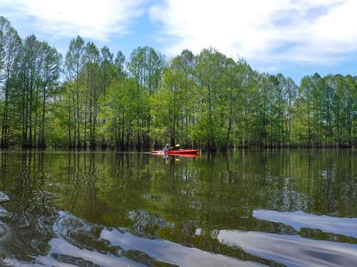 Sparkleberry Swamp-84