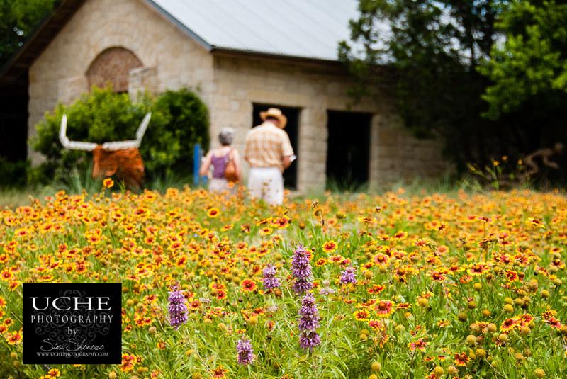 20100522_wildflower_longhorn