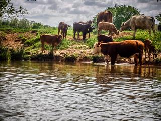 Dyar Pasture and Lake Oconee-112