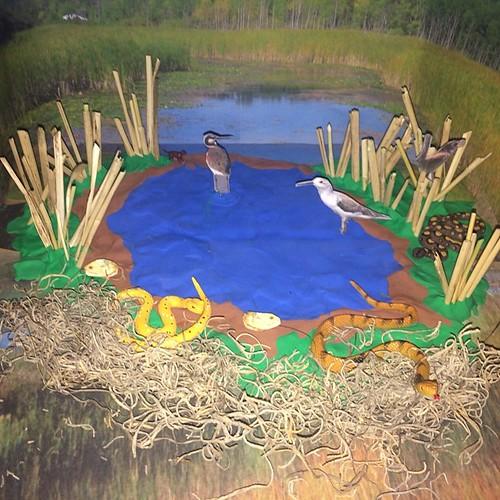 Blakes MarshWetland Diorama Killmenow Candi Flickr