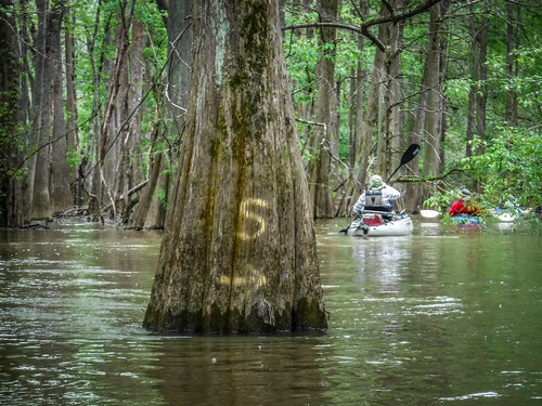 Sparkleberry Swamp-66