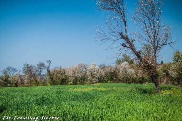 Sidhpur-Zen Valley (6)
