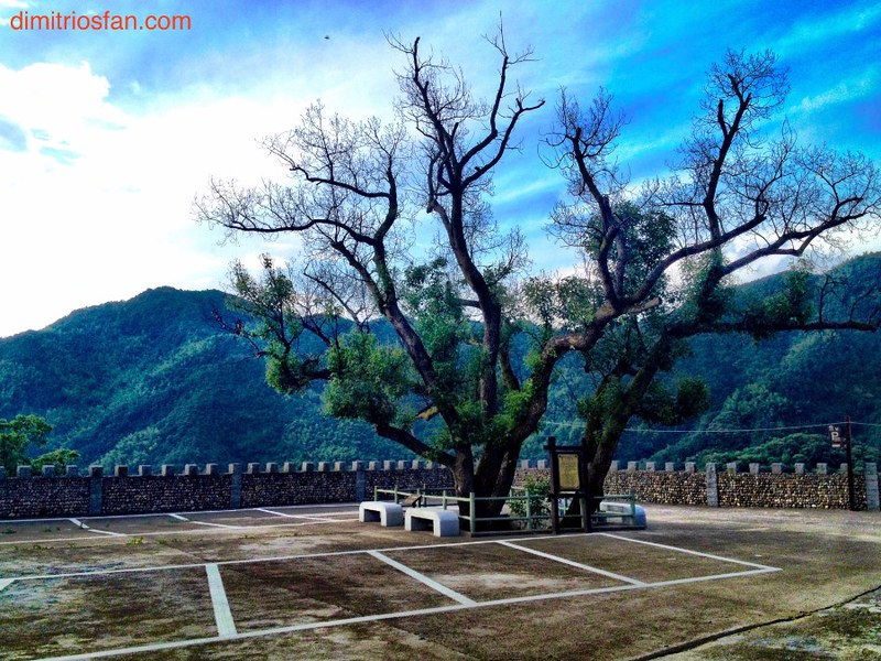 huge old tree in squre of ancient chinese village in fuzhishan mountain