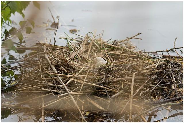 Eitjes nog in het nest.