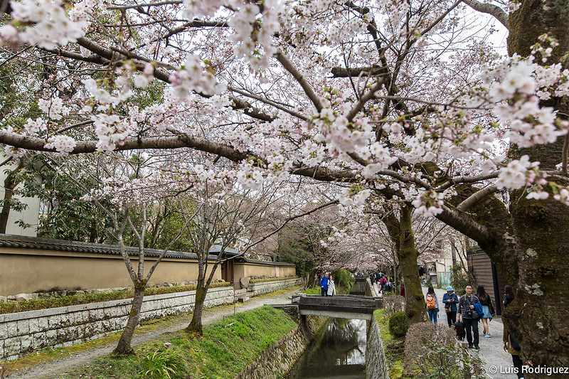 Paseo-Filosofia-Kioto-45