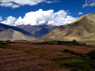 flower farms in valley in mustang