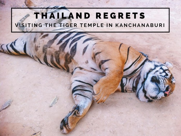 Thailand Regrets: Visiting The Tiger Temple In Kanchanaburi